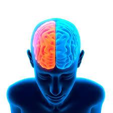 características del cerebro